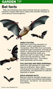 Like most of us, bats need the right kind of house